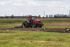 Tractor and storks in the field. Red Tractor plowing field on a background of the sky and the forest Stock Photo
