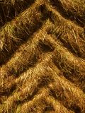 Tractor tire tracks in dry grass Stock Image