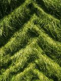 Tractor tire tracks in grass Royalty Free Stock Photo