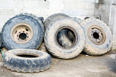 Tractor tires used sort of wall, smeared with mud Royalty Free Stock Photography