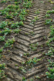 Tractor track Stock Photography