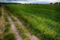 Tractor track. At the edge of a meadow royalty free stock photo