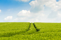 Tractor track through a field Stock Photo