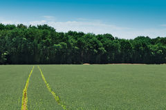 Tractor tracks on a field Royalty Free Stock Images