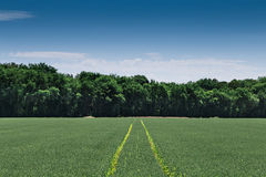 Tractor tracks on a field Stock Image