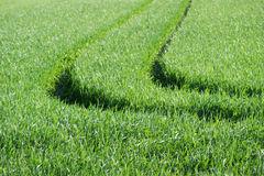 Tractor tracks on a field v2. Tractor tracks on a field of wheat in Spring Stock Images