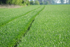 Tractor tracks on a field Royalty Free Stock Photo