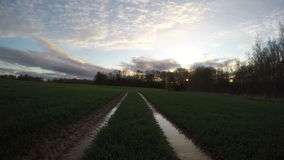 Tractor tracks going through the field, time lapse 4K. Tractor tracks going through the young wheat field after rain on overcast spring evening by the forest stock video footage