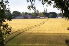 Tracks in a field to a village. Tractor tracks in the golden fields to village Louvemont in France stock photography