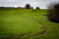 Tractor tracks through grazing field Stock Photo