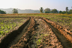 Tractor tracks in muddy field Royalty Free Stock Photography