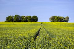 Tractor tracks on a field and group of trees. Horizon and blue sky royalty free stock photos