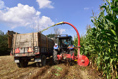 Tractor and trailer harvesting corn Stock Photo