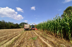 Tractor and trailer harvesting corn Royalty Free Stock Photography