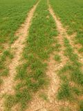 The tractor trails in the spring wheat field Stock Photography