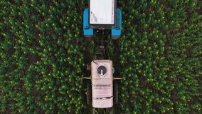 Top view of tractor treats agricultural plants on the field. Tractor treats agricultural plants on the field, top view from height stock video