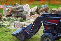 Tractor tree clean up. A tractor cleaning up a chopped tree Stock Images