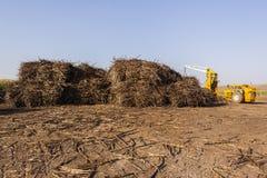 Farming Sugarcane Harvest Yard Royalty Free Stock Images