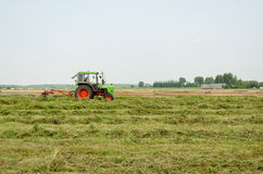 Tractor turning raking cut hay in field Royalty Free Stock Photos