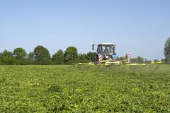 The tractor with the unit evenly spreads the chamfered alfalfa, so that it reaches the feed condition stock photography