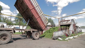 Tractor unloads grass for Herbal feed production stock footage