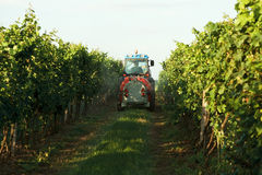 Tractor in the vineyard Stock Image