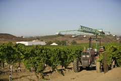 Tractor In Vineyard Royalty Free Stock Images