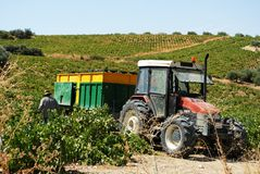 Tractor in vineyard, Montilla. Stock Photo