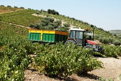 Tractor in vineyard, Montilla. Stock Images