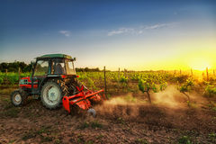 Tractor in the vineyard at sunset Royalty Free Stock Photos