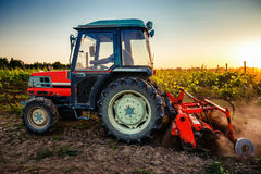 Tractor in the vineyard at sunset Stock Photos