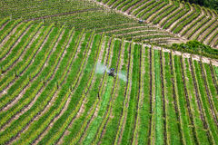 Tractor among vineyards in Piedmont, Italy. Royalty Free Stock Photos