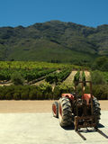 Tractor and vineyards, South Africa Royalty Free Stock Image