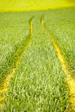 Tractor way path Royalty Free Stock Photos