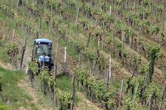 Tractor in wijngaard Royalty-vrije Stock Afbeelding