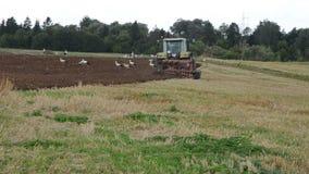 Tractor work plow field stork birds walk soil stock video