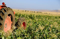 Tractor Working in Corn Field. Farm Tractor Working in Corn Field Stock Photography