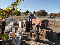 Tractor working out in the vineyard. Old tractor with its driver out in the vineyard picking up the grape crates. Photo taken On November 3 near Gilroy Stock Photography