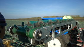 Tractor working to harvest cabbage stock video footage