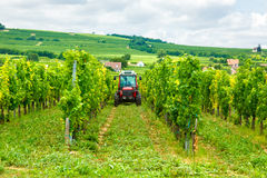 Tractor working in the vineyard Stock Photos