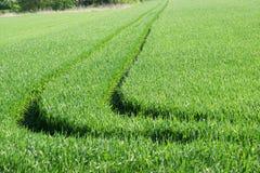 Tractorsporen op een gebied v2 Royalty-vrije Stock Foto