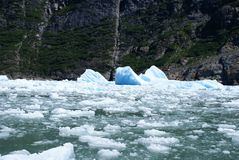 Tracy Arm Fjord - Eisberge stockbilder