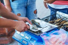 Trade seafood, a man weighs fish on the scales of a street vendor royalty free stock photography