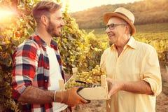 Tradición de la familia del viñedo - padre e hijo que miran las uvas foto de archivo libre de regalías