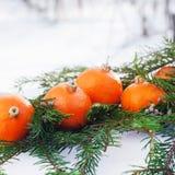 Tradición rusa para comer las mandarinas en el Año Nuevo Fotografía de archivo