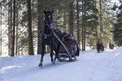 Tradicionalmente paseo del trineo en las montañas polacas imagen de archivo