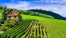 Traditioanl countryside in Alsace with vineyards and castles. fa Stock Photo