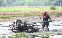 The tradition farmer. BANGKOK,THAILAND-NOVEMBER 21:The tradition farmer use a small machine prepare the soil for planting rice on the farm filed at Nong Jok on stock photos