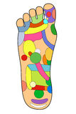 Traditional alternative heal, Acupuncture - Foot Scheme. On white Royalty Free Stock Images