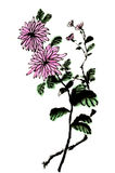 The traditional ancient Chinese hand painted chrysanthemum Royalty Free Stock Photo